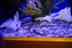 seahorse images stock