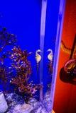 seahorse photographie stock