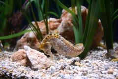 seahorse Стоковые Изображения