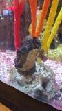 seahorse Стоковое Изображение RF