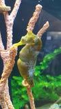 seahorse stock foto's