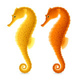 Seahorse. S illustration on white background Royalty Free Stock Images