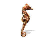 Seahorse Royaltyfri Illustrationer