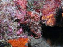 Seahorse Stockfotografie