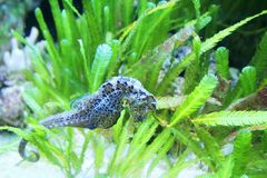 Seahorse Stock Image