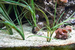 seahorse Fotografie Stock Libere da Diritti