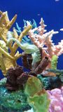 seahorse Royalty-vrije Stock Afbeeldingen