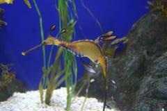 Seahorse stockbilder