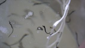 Seahorse aquaculture-3 almacen de metraje de vídeo