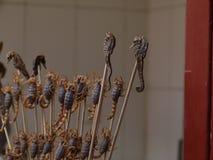 Seahorse auf dem Stock zu essen Stockfotos