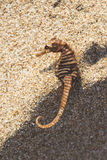 Seahorse on the beach Stock Photo