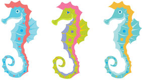 Seahorse Royalty Free Stock Image