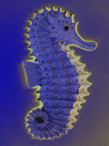 Seahorse d'ardore Immagini Stock