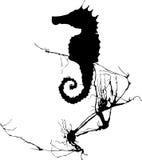Seahorse en Zeewier #1 Royalty-vrije Stock Afbeelding