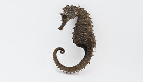 Seahorse, or hippocampus Stock Photos
