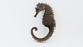 Seahorse, or hippocampus Stock Photos