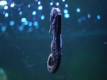 Seahorse i havsvatten arkivfilmer