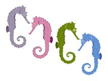 Seahorse illustrations Stock Photography