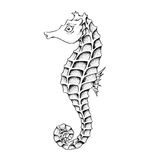 Seahorse Line Art Illustration Royalty Free Stock Image