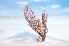 Seahorse met rode koralen op wit zandstrand, oceaan Stock Foto