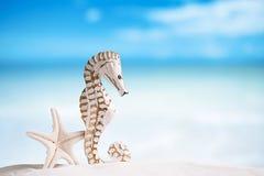 Seahorse met witte zeester op wit zandstrand Stock Afbeelding