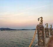 Seahorse plaża fotografia royalty free