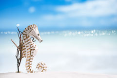 Seahorse with red corals on white sand beach Royalty Free Stock Image