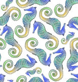 Seahorse seamless pattern tile. Colorful seahorse seamless pattern that matches all sides. On white background Royalty Free Stock Image