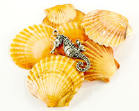 Seahorse and seashells Royalty Free Stock Photography