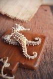 seahorse secado en fondo de madera Fotos de archivo