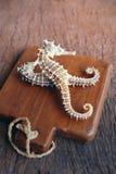 seahorse secado en fondo de madera Imagen de archivo libre de regalías