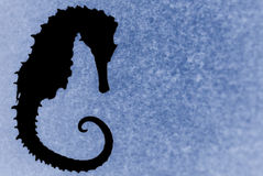 Seahorse Silhouette/Blue. Abstract seahorse against a textured blue background with a blur treatment royalty free stock images