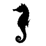 Seahorse Silhouette Illustration Stock Photo