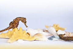 Seahorse on a star. Seahorse staying on a star with seashells around Stock Photos