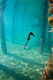 A seahorse under a wharf in Honduras Stock Photography