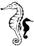 Seahorse vector Royalty Free Stock Photo