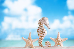 Seahorse with white starfish on white sand beach, ocean,  sky an Royalty Free Stock Image