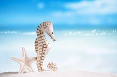 Seahorse z białą rozgwiazdą na białej piasek plaży, ocean, niebo Obraz Stock
