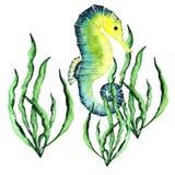 Seahorse z gałęzatki Handdrawing akwareli ilustracją Wysoka Rozdzielczość Royalty Ilustracja