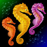 seahorses διάνυσμα Στοκ Εικόνες