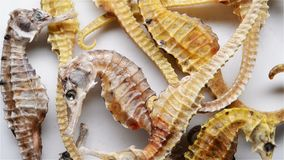 Seahorses ως κινεζική ιατρική απόθεμα βίντεο