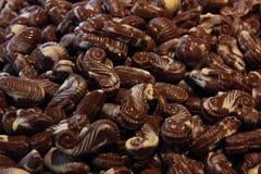 seahorses шоколада Стоковые Изображения RF