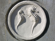 seahorses Arkivfoto