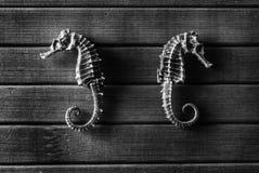 seahorses Стоковые Фото