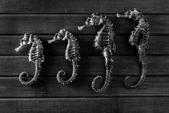 Seahorses. Stock Photos