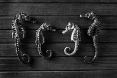 Seahorses. Stock Image