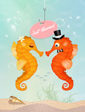 Seahorses in love Stock Images
