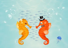 Seahorses in love Royalty Free Stock Images