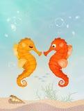 Seahorses op de ertsader Stock Afbeeldingen
