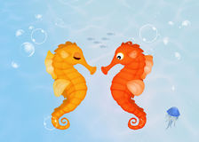 Seahorses on the reef Stock Image